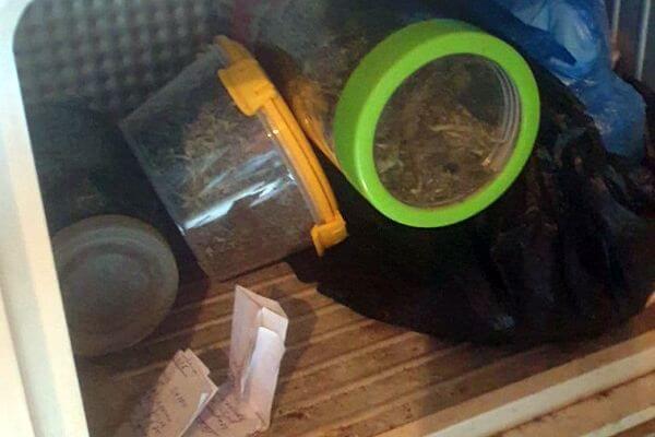 Полкило конопли, марихуаны и гашиша нашли у селянина в Самарской области | CityTraffic