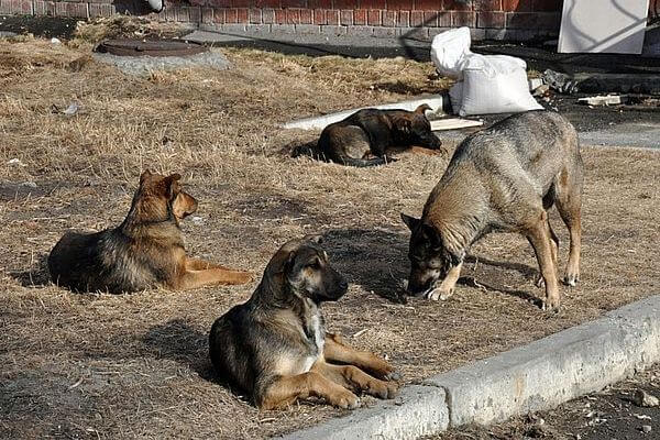 Прокуроры обнаружили в парке Кинеля 18 бродячих собак | CityTraffic