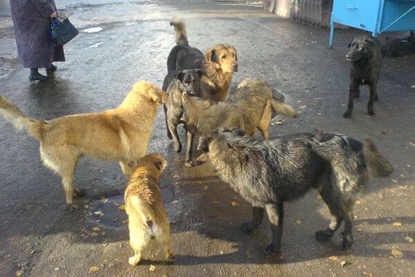 В Самарской области власти предлагают увеличить показатели по отлову бездомных животных | CityTraffic