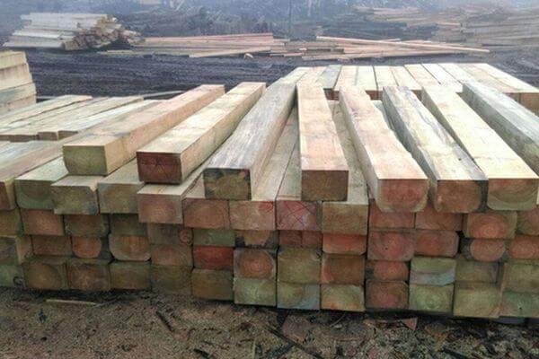 В России ужесточили наказание за вывоз древесины | CityTraffic