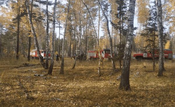 В Самаре 136 человек тушат лесной пожар | CityTraffic
