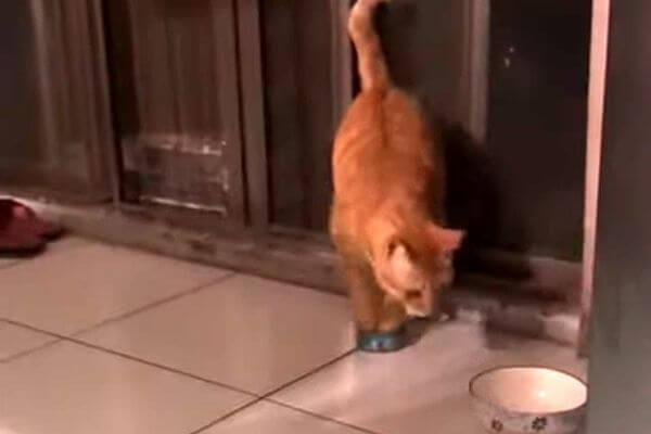 Кот увидел банку с едой и потащил ее к своей миске: видео | CityTraffic