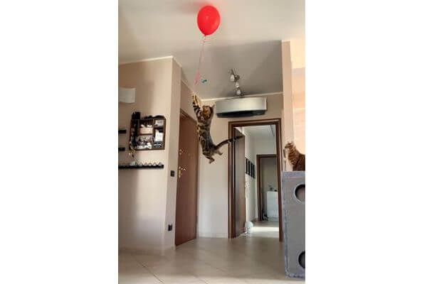 Котопес делает невероятный прыжок, чтобы достать воздушный шар: видео | CityTraffic