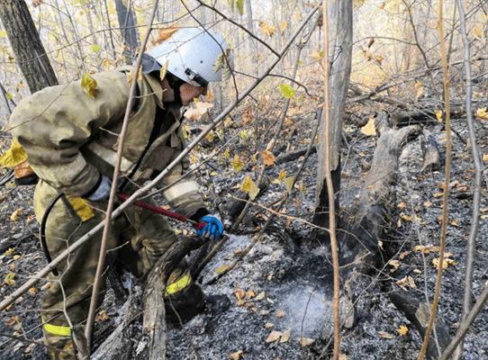 Около 19 часов потребовалось на ликвидацию лесного пожара в районе горы Барсук в Самаре | CityTraffic