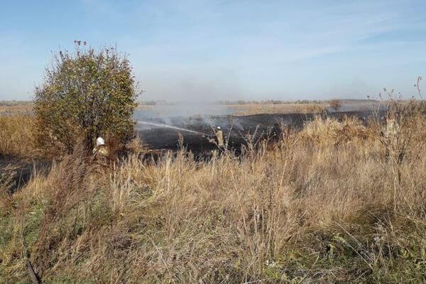 За воскресенье в Самарской области сгорело 0,1 га камыша и 1,14 га травы | CityTraffic