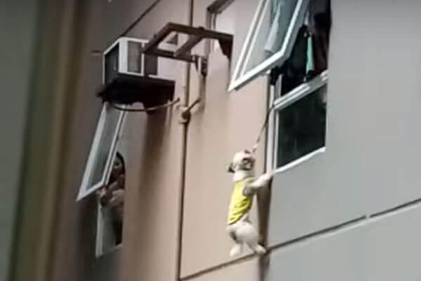 Щенок выпал из окна 3 этажа и провисел на поводке 20 минут, пока его не спасли: видео | CityTraffic
