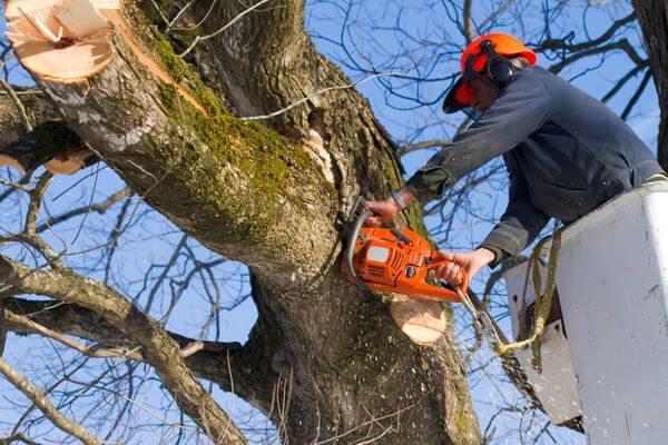 В Самаре инвесторов хотят обязать платить за срубленные деревья | CityTraffic