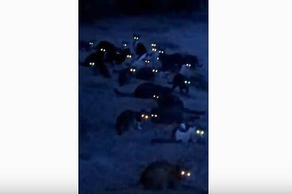 На видео попали 50 кошек со светящимися глазами | CityTraffic