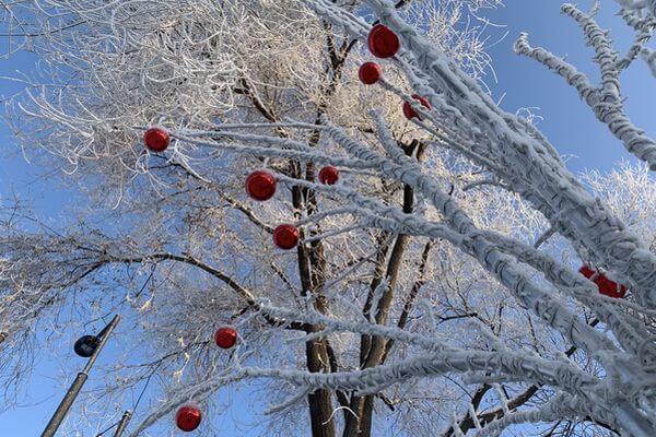В Самаре появились деревья с яблоками | CityTraffic