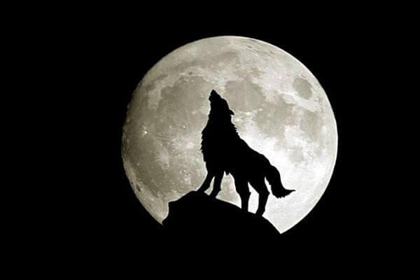Луна Волка взойдет над Землей 28 января | CityTraffic