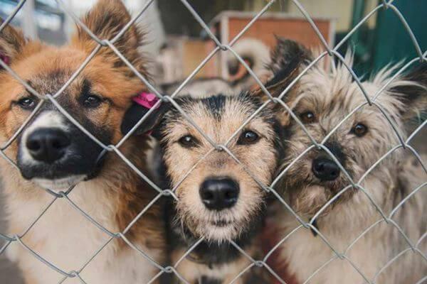 В Тольятти ищут того, кто за 1,1 млн рублей будет отлавливать в городе бездомных собак | CityTraffic