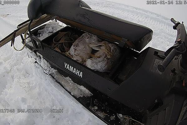 Браконьер убил двух зайцев в Самарской области | CityTraffic