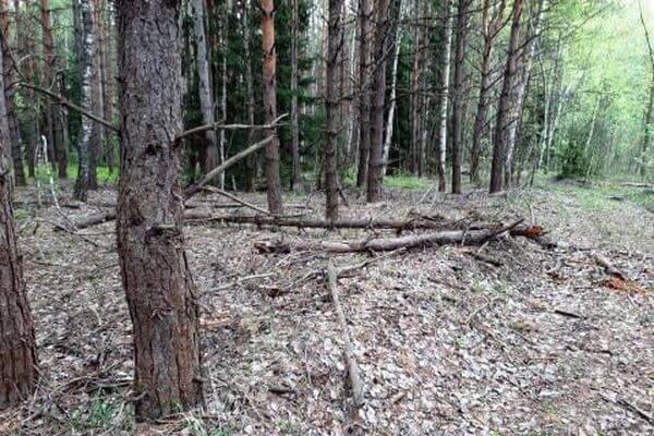 Миллионный контракт на расчистку леса сорвала фирма из Самарской области | CityTraffic