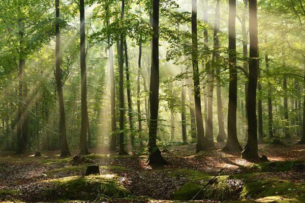 В России оцифруют лес   CityTraffic