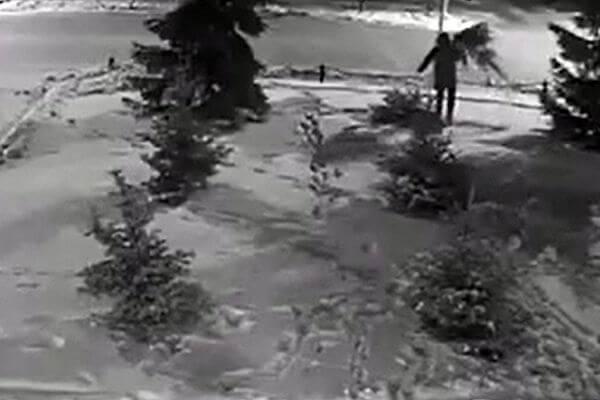На похитителя елки из Самарской области завели уголовное дело | CityTraffic