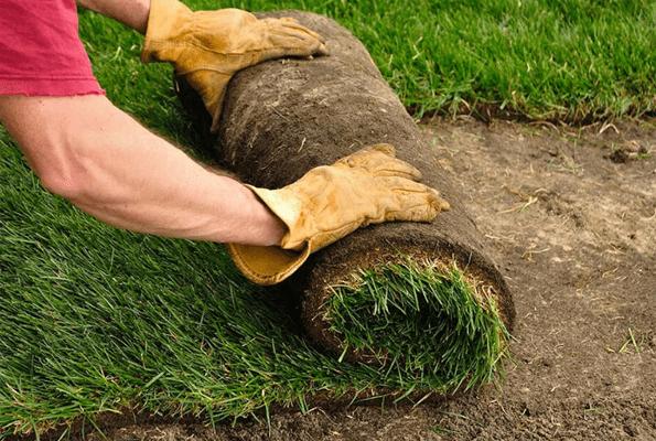 На озеленении сквера имени Жилкина в Тольятти сэкономят 1,5 млн рублей   CityTraffic