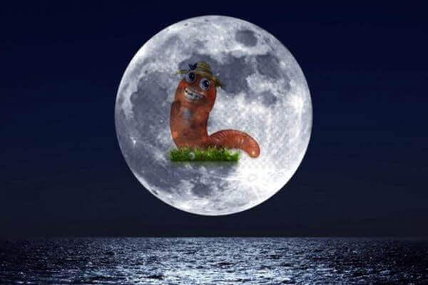 Над Землей взойдет Червячная Луна | CityTraffic