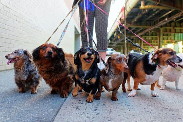 В нескольких районах Самары появятся площадки для выгула собак | CityTraffic