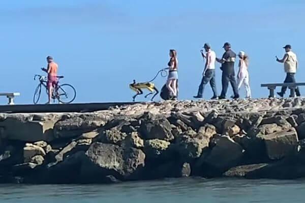 Дама выгуливала по пирсу собаку-робота и попала на видео | CityTraffic