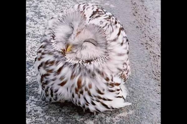Девушка спасла на трассе сову, которая заснула в мороз посреди дороги | CityTraffic
