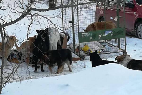 На Металлурге в Самаре отловят собак, терроризирующих прохожих | CityTraffic