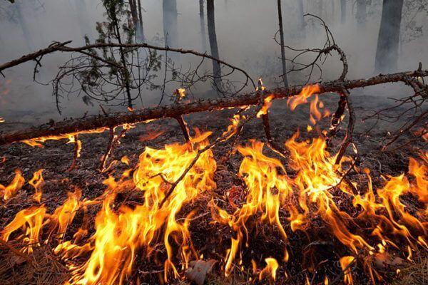 В Самарской области 4 часа тушили горящий лес на площади 8 га | CityTraffic