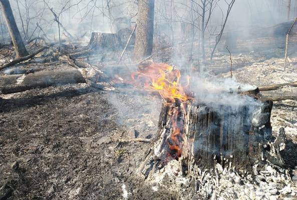 В Тольятти 17 человек тушили пожар в лесу | CityTraffic