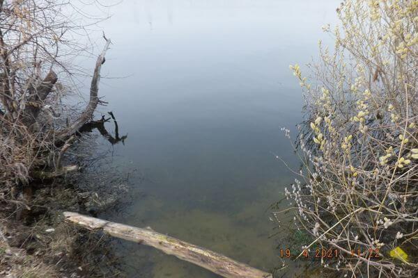 Причина гибели рыб на озере в Тольятти выяснится после изучения проб воды | CityTraffic