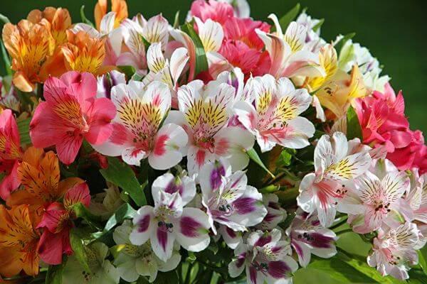 Правительство Самарской области ищет поставщика цветов | CityTraffic