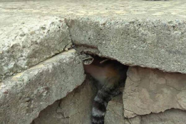 В Тольятти спасатели вызволили кота, который застрял под плитами возле подъезда МКД | CityTraffic