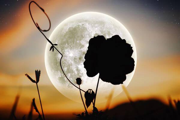 Полное затмение Цветочной Суперлуны ждет землян 26 мая 2021года