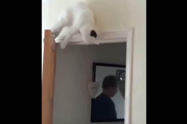 Кот рухнул с высоты из своей засады на хозяина | CityTraffic