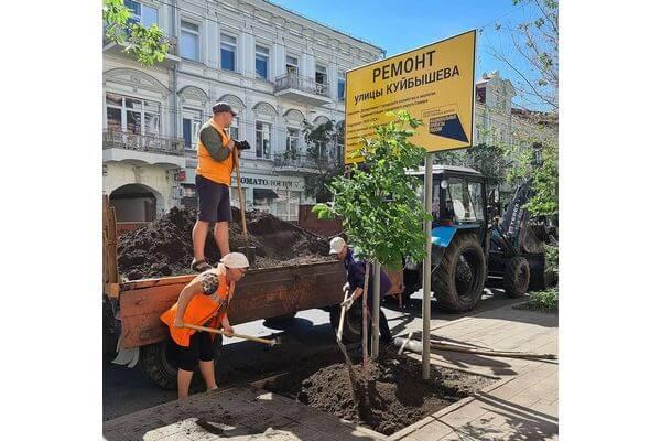 На улице Куйбышева в Самаре высадили  21 каштан | CityTraffic