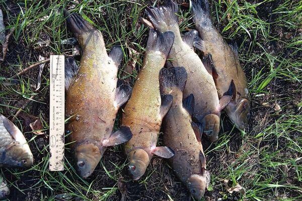 На жителя Самарской области, наловившего рыбы на 10 тысяч рублей, завели уголовное дело