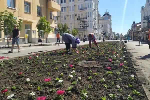 В Самаре высаживают цветы на улице Ленинградской взамен тех, что пострадали от жары | CityTraffic
