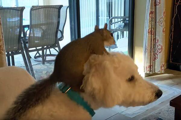 Белка полюбила собаку иприходит кдругу вгости каждое утро ивечер