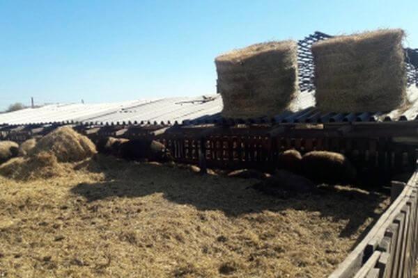 Житель Самарской области убил женщину и спрятал ее тело на зернотоке | CityTraffic