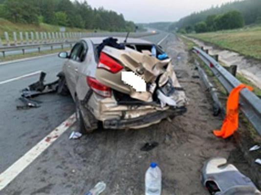 В Самарской области три человека попали в больницу из-за дикого животного на проезжей части | CityTraffic