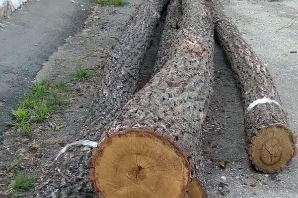 Пенсионер из Самарской области вырубил дубов себе на дрова на 400 тысяч рублей | CityTraffic