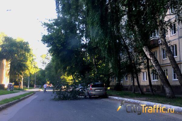 В Тольятти от жары падают деревья | CityTraffic