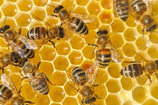 В РФ вступил в силу закон, охраняющий пчел | CityTraffic