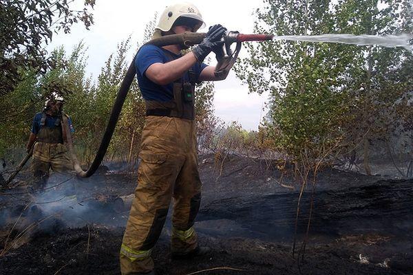 Глава Тольятти заявил, что лесной пожар мог стать результатом поджога | CityTraffic