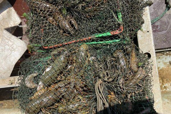 Четверо браконьеров поймали 1400 раков на Волге в Самарской области | CityTraffic