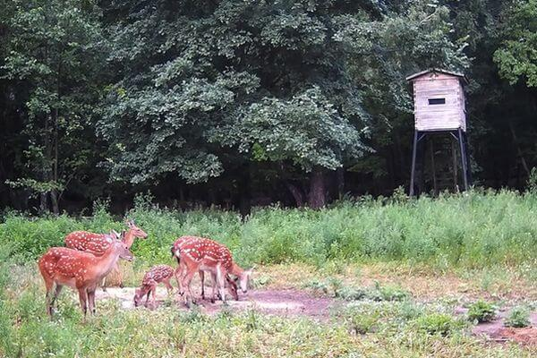 Впервые в Самарской области родился полувольный олененок | CityTraffic