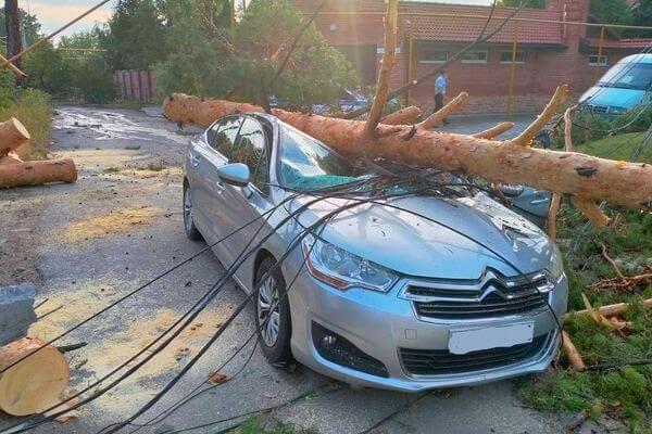 Водитель из Тольятти была внутри автомобиля, когда на него рухнуло дерево | CityTraffic