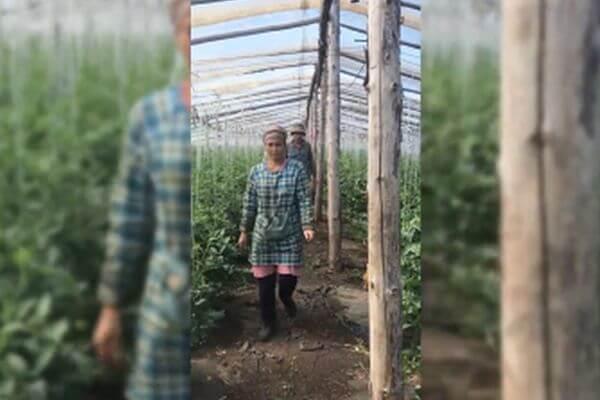 В Самарской области нелегалы строили коттеджный поселок и выращивали овощи | CityTraffic
