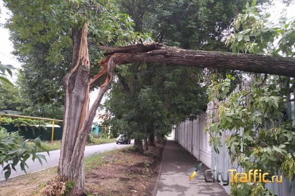 В Тольятти ураган подвесил дерево над пешеходной дорожкой