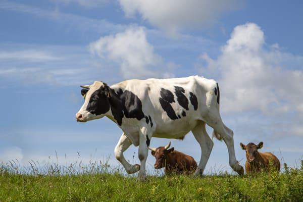 В Шенталинском районе Самарской области появится молочная ферма | CityTraffic