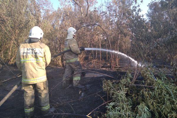 В Тольятти горит 3 га леса   CityTraffic