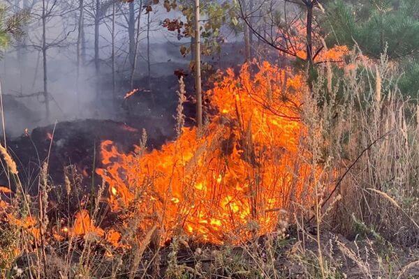 В Тольятти введен режим ЧС из-за лесного пожара | CityTraffic
